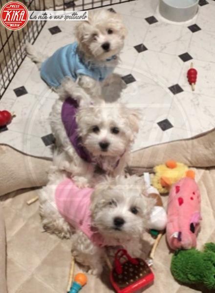 Barbra Streisand - Hollywood - 01-03-2018 - Bizzarrie da star: Barbra Streisand clona il suo cane