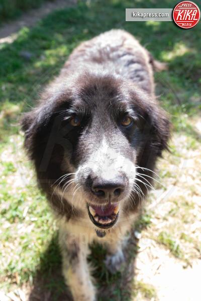 Baffi d'Argento, Daniela Salvi - Roma - 19-06-2019 - Baffi d'Argento: la prima casa di riposo per cani orfani