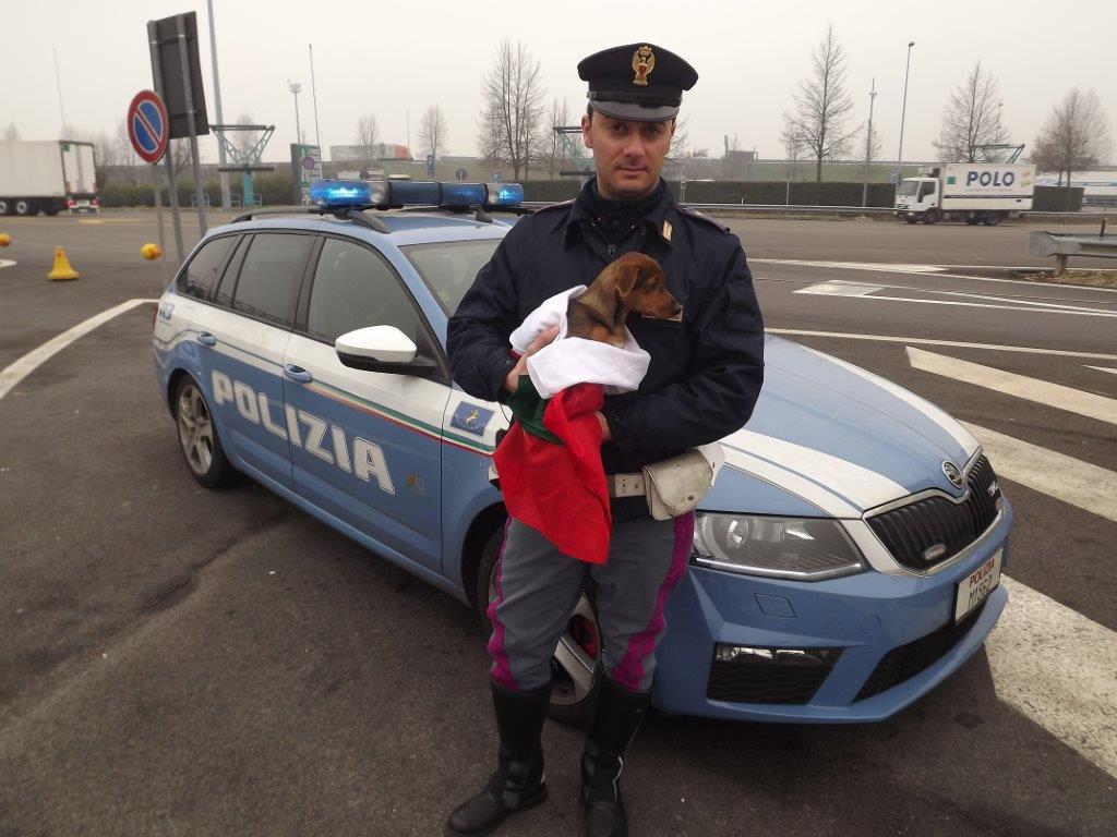 Cagnolina di 4 mesi salvata in autostrada dalla polizia.